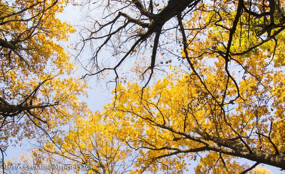 Золотая осень 2018 г. Лианозовский парк
